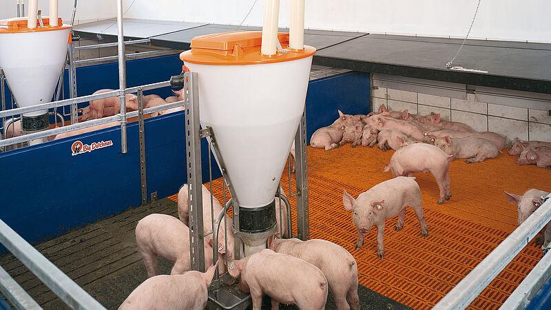 Zoneopvarmning: idéelt i forbindelse med opdræt af smågrise
