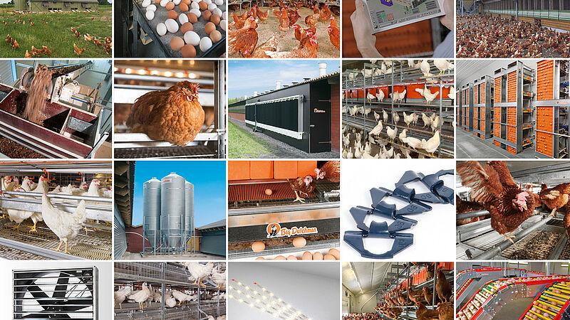 Moderne ægproduktion