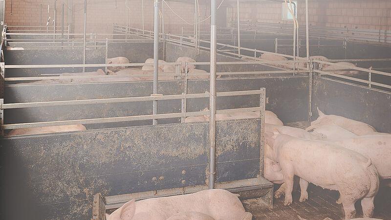 Klimastyringsanlæg til grise: CombiCool til slagtesvin
