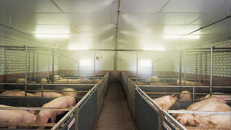 CombiCool – højtryks-tågeanlæg til svineproduktion